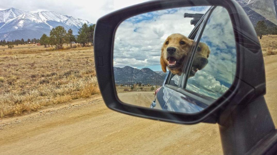 looking in rear view mirror